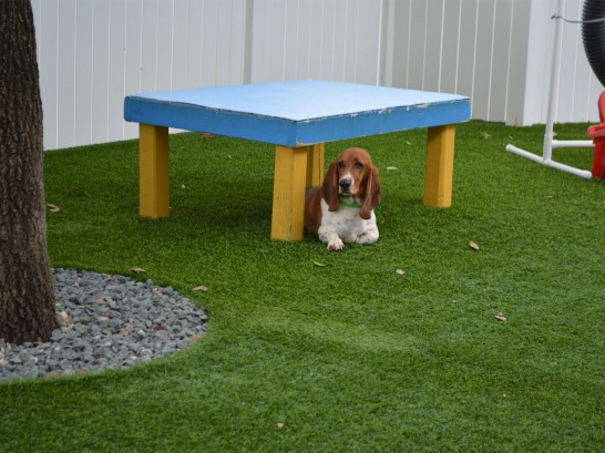 Artificial Grass Photos: Faux Grass Fossil, Oregon Drainage, Grass for Dogs