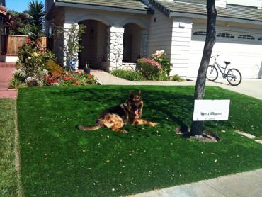 Artificial Grass Photos: Outdoor Carpet Scappoose, Oregon Landscaping, Dogs