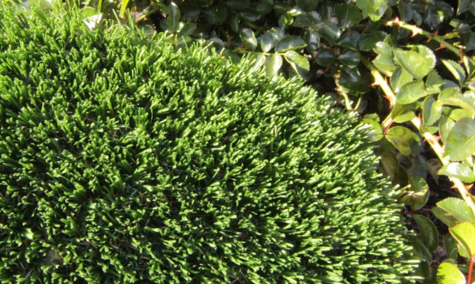 Hollow Blade-73 syntheticgrass Artificial Grass Portland Oregon